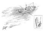 currican_Oceanografica